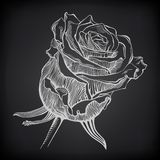 Black and white digital drawing sketch rose on Royalty Free Stock Photo