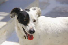 Black & White Dog Stock Images