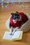 Black-white dog bespectacled and in a reindeer suit put paws on the open book. Stock Images