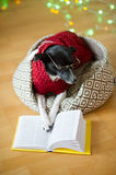 Black-white dog bespectacled and in a reindeer suit put paws on the open book. Stock Photos