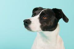 Black and white dog Stock Photos