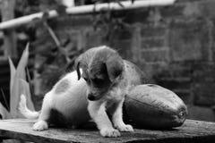 Black And White, Dog, Dog Like Mammal, Monochrome Photography Royalty Free Stock Image