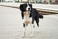 Black and white dog Stock Photos