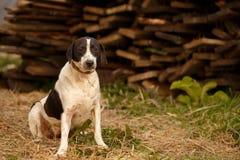 Black and White Dog  on Manger Stock Photos