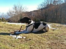 Black and white dog in the mountain Royalty Free Stock Photos