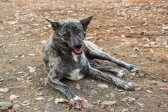 Black-white dog sitting on the playground. Royalty Free Stock Photo