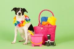 Black and white dog on vacation Stock Image