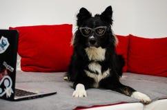 Dog wearing glases stock image