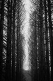 Black and White dramatic deadly Trees Stock Images