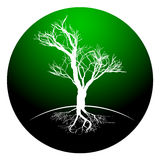 Black and white drawing of deciduous tree. Black silhouette on a white background. Royalty Free Stock Image