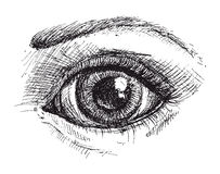 Black and white drawing of eye. And eyebrow . Vector illustration Stock Photo