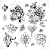 Black and white drawing fantasy flowers and leaves Stock Image