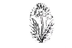 Dandelion on white background vector illustration