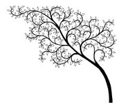 The black-and-white drawing. The sketch, tree with florid branches and leaves Royalty Free Stock Images