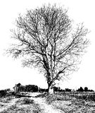 Black and white dry tree Royalty Free Stock Photography