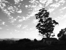 Black and White Early morning landscape with tree. And house visible, in Oudtshoorn, Karoo stock photography