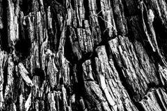 Black&white en bois de texture Image stock