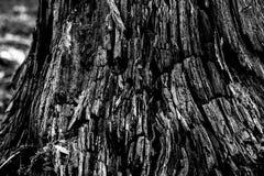 Black&white en bois de texture Photographie stock libre de droits