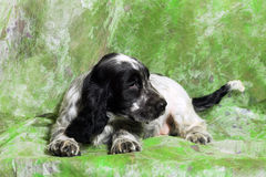 Black and white English Cocker Spaniel puppy Royalty Free Stock Photo