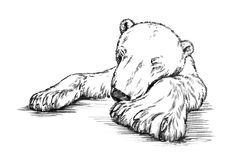 Black and white engrave isolated bear Stock Images