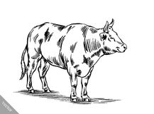 Black and white engrave isolated cow Stock Photos