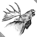 Black and white engrave isolated elk hand draw vector illustration Royalty Free Stock Images