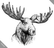 Black and white engrave isolated elk hand draw vector illustration Stock Images