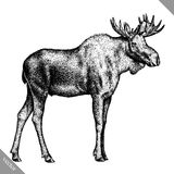 Black and white engrave isolated elk hand draw vector illustration Stock Photos