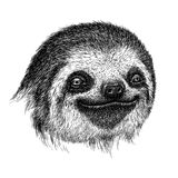 Black and white engrave isolated sloth illustration Royalty Free Stock Images