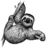 Black and white engrave isolated sloth illustration Stock Image