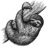 Black and white engrave isolated sloth illustration Stock Images