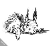 Black and white engrave isolated squirrel illustration Royalty Free Stock Image