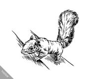 Black and white engrave isolated squirrel illustration Royalty Free Stock Images