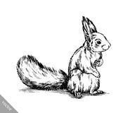 Black and white engrave isolated squirrel illustration Stock Images