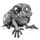 Black and white engrave isolated tarsier illustration. Black and white engrave isolated tarsier art stock illustration