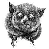 Black and white engrave isolated tarsier illustration. Black and white engrave isolated tarsier art royalty free illustration
