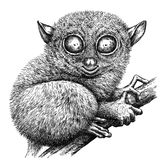 Black and white engrave isolated tarsier illustration. Black and white engrave isolated tarsier art vector illustration