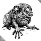 Black and white engrave isolated tarsier vector illustration. Black and white engrave isolated tarsier vector art royalty free illustration