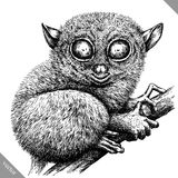Black and white engrave isolated tarsier vector illustration. Black and white engrave isolated tarsier vector art vector illustration