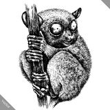 Black and white engrave isolated tarsier vector illustration. Black and white engrave isolated tarsier vector art stock illustration