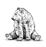 Black and white engrave isolated vector bear Royalty Free Stock Images