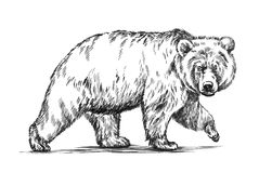 Black and white engrave isolated vector bear Stock Photo