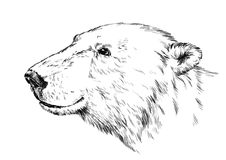 Black and white engrave isolated vector bear Stock Image
