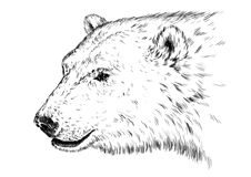 Black and white engrave isolated vector bear Stock Photos