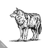 Black and white engrave  wolf Stock Photography