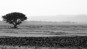Black and white ethiopian landscape