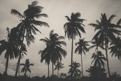 Black and white fade color of palm tree on the beach Stock Photography