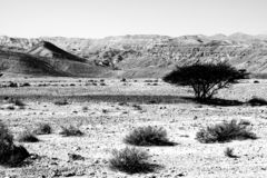 Black and white fantasies of the desert. Rocky hills of the Negev Desert in Israel. Breathtaking landscape of the rock formations in the Southern Israel. Dusty stock images