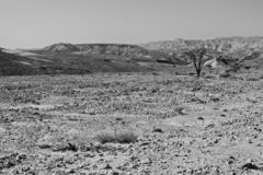 Black and white fantasies of the desert. Rocky hills of the Negev Desert in Israel. Breathtaking landscape of the rock formations in the Southern Israel. Dusty stock photo