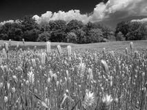 Black and White Farmland. Black and white wheat field and clouds Royalty Free Stock Photo